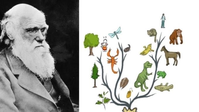진화론은 대표적인 '가짜뉴스', '바퀴벌레에서 사람이 진화했다고(?)'